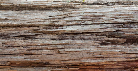 Wood grain bark texture