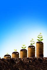Money growing in soil,success concept