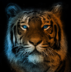 Digital illustration of a bengal tiger