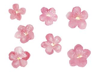梅の花の模様
