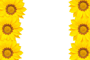 A field of yellow flowers on blurred nature green background
