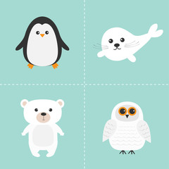 Arctic polar animal set. White bear, owl, penguin, Seal pup baby harp. Kids education cards. Blue background. Isolated. Flat design.