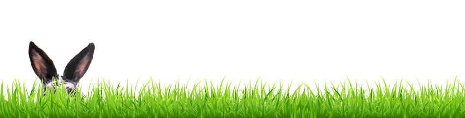 Hasenohren im Gras