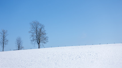 winter scenery background