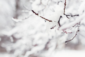 Tree branches covered in snow, winter abstract background