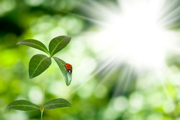 image of ladybug on a leaf in the garden against the sun