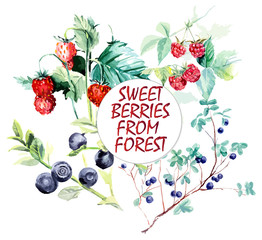 Wild berries from forest. Branch raspberry, bilberry and wild strawberry. Forest miniatures. Watercolor hand drawn vector illustration