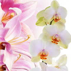 Orchid with lily.Flower bouquet