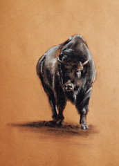 bison pastel drawing