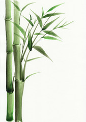 Bamboo original watercolor painting. Asian style.