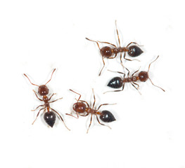 ants on a white background