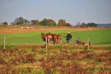 Lancaster County, Pennsylvania - October 19, 2015:  Amish farmer plowing a field with a team of three donkeys  *