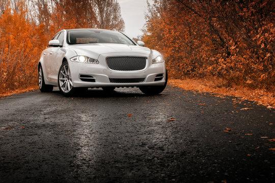 Whtie luxury car stay on wet asphalt road at autumn