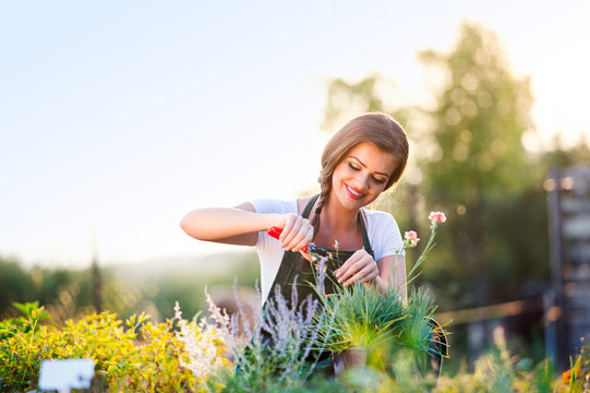 Young gardener cutting little flower plant, green sunny nature