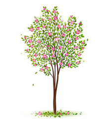 Spring cherry tree with green leaves and pink flowers