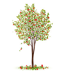 Cherry tree with berries