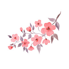 Cherry blossom. Flowering branch. Hand drawn watercolor illustration in vector 1