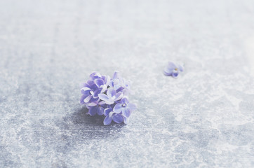 Single lilac flower with empty space over grey concrete background