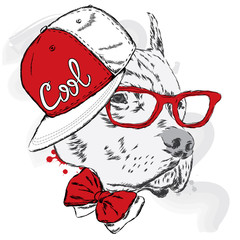 Pitbull in cap and tie. Dog vector. Cool dog.