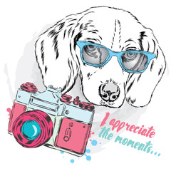Cool dog with glasses and a camera. Dog vector. Cute puppy.