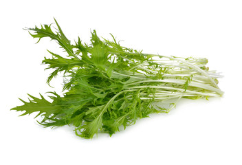 Mizuna, Japanese water vegetable or potherb mustard on white background