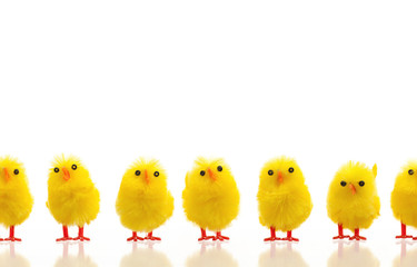 Abundance of easter chicks on a row