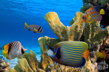 Tropical fish on the coral reef in Red Sea