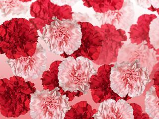 Fototapete - Floral background. Carnation