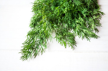 Dill and fennel on a white background.