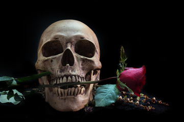 Still life with human skull with red rose,and telephone on black