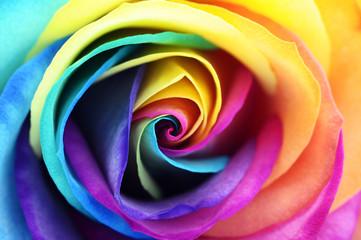 Fototapete - Close up of rainbow rose flower