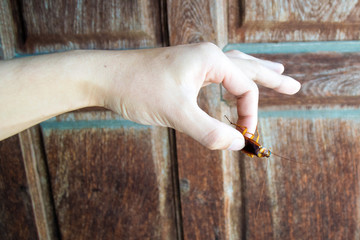 Holding cockroach - Man's hand hold cockroach