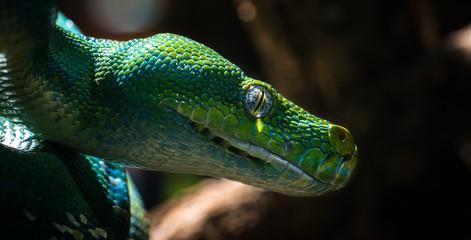 Schlangenauge
