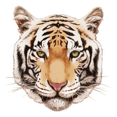 Portrait of Tiger. Hand-drawn illustration, digitally colored.