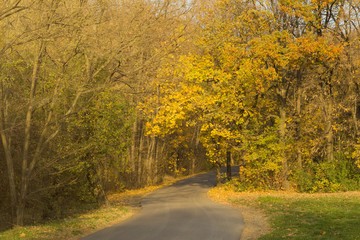 Road and beautiful trees with yellow and green leaves. Autumn scene