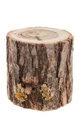 tree stump, isolated on white