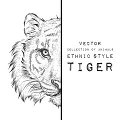 Wall Murals Hand drawn Sketch of animals Hand draw tiger portrait. Hand draw vector illustration