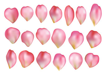 Pink realistic vector rose petals set