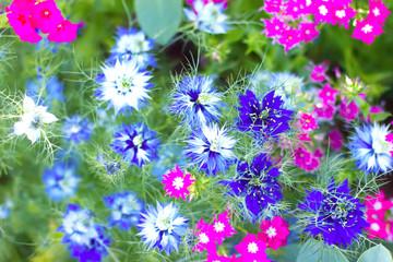 Floral daisy print in multicolor