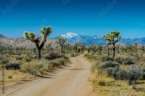 Wall mural Snow Capped Mountian overlooks Joshua Trees Flanking Dirt Road