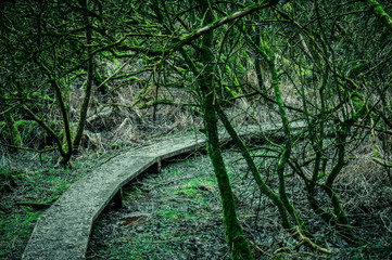 Path in a spooky forest