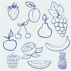 Fruits and berries. Sketch