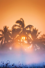 Coconut trees, the morning light, and mist.
