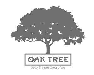 Search photos Category Plants and Flowers > Trees > Oak Tree