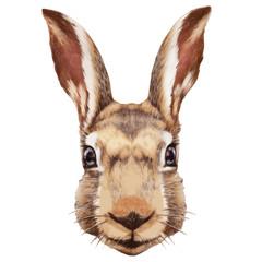 Portrait of Rabbit. Hand-drawn illustration, digitally colored.