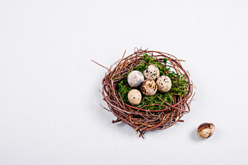 Quail eggs in a nest of twigs with green moss