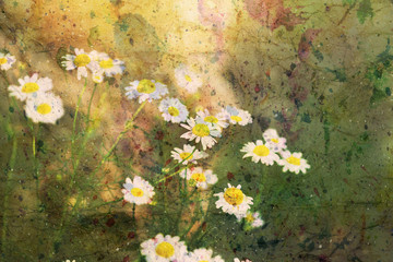 artwork with beautiful chamomiles and watercolor splashes