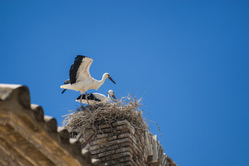 Storks on the nest in Aragon
