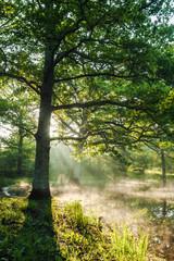 Big, beautiful, old oak forest. Chambord, France.