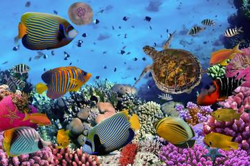 Wall Mural - colorful coral reef with many fishes